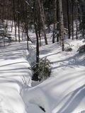 Forêt Ouareau 1
