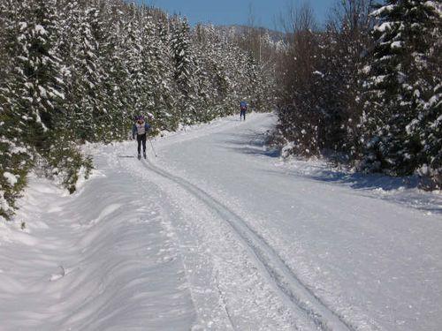 Forêt Montmorency